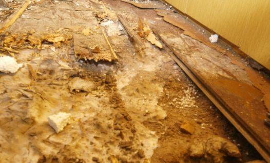 Majavammist kahjustatud põrand