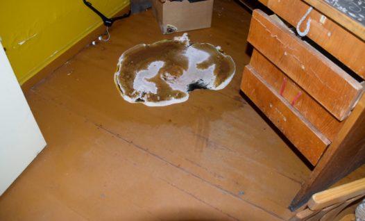 Majavammi viljakeha põrandal